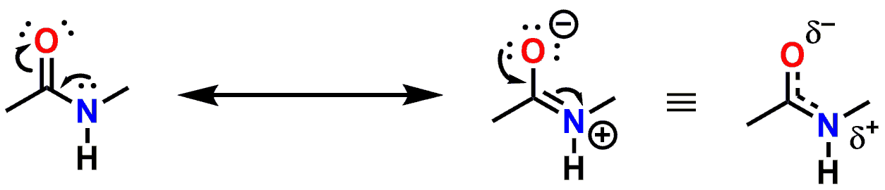 Figure 3: Resonance delocalization of the lone pair of electrons of the Nitrogen atom.
