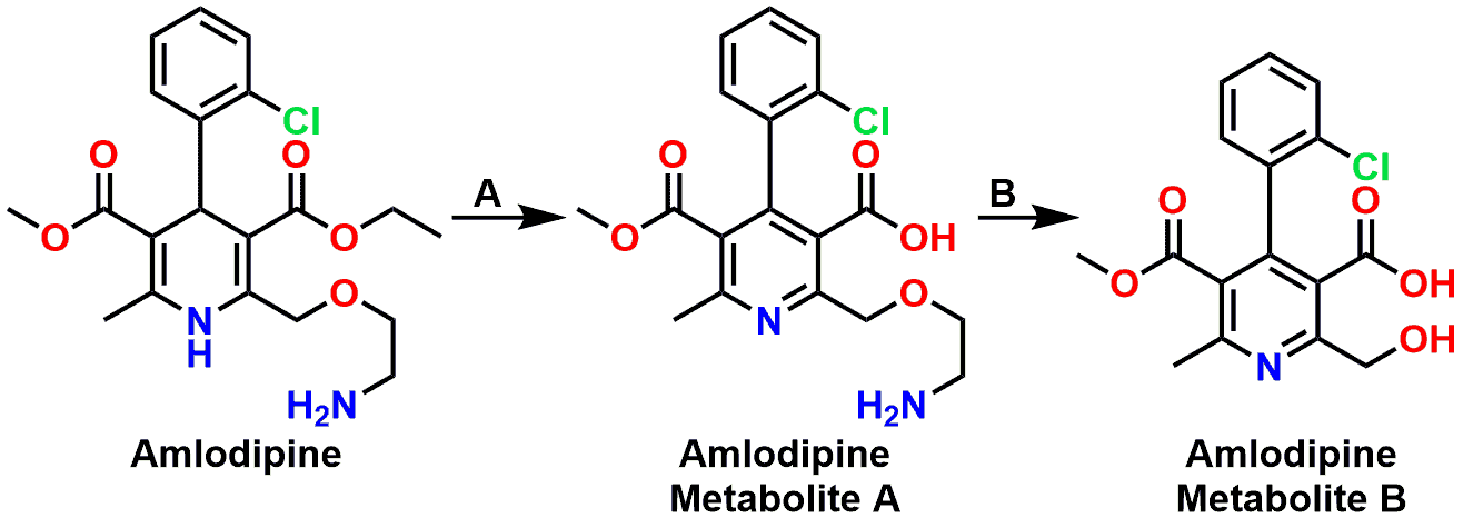 Figure 8: Metabolism of Amlodipine