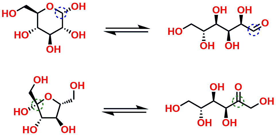 Figure 6: Equilibrium ring open and closed form of Glucose and Fructose.