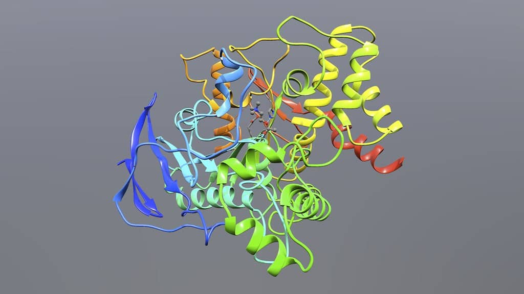 A 3D model of acetylcholinesterase bound to Acetylcholine as a tetrahedral intermediate during the hydrolysis of the neurotransmitter