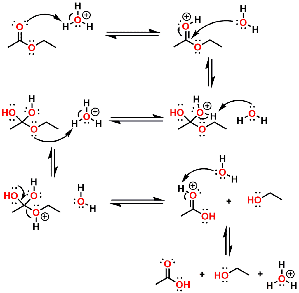 Figure 9 - Mechanism for acid catalyzed ester hydrolysis